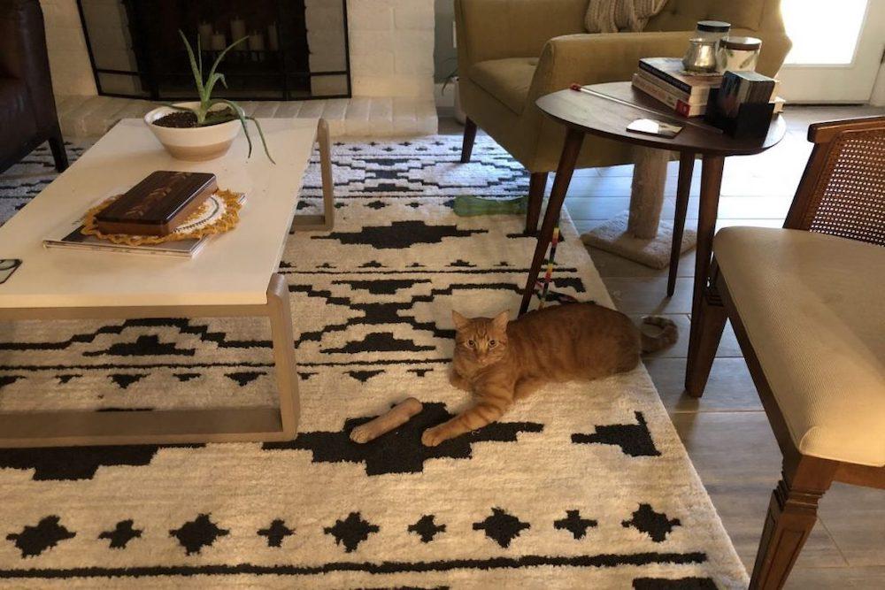 gatto illusione ottica